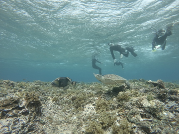 3/28西表島バラス島体験ダイビングツアー31
