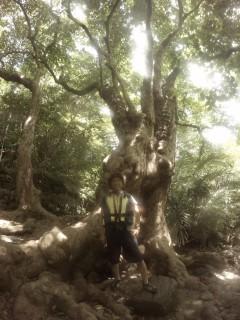 5/13西表島ピナイサーラの滝半日カヌー(カヤック)ツアー2