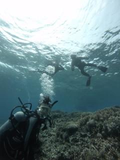 3/28西表島バラス島体験ダイビングツアー22