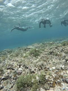 3/28西表島バラス島体験ダイビングツアー32