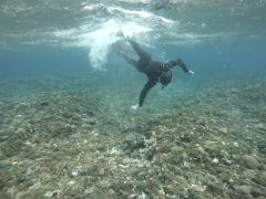 3/28西表島バラス島体験ダイビングツアー52
