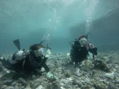 9/23西表島バラス島体験ダイビングツアー3
