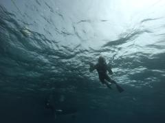 3/28西表島バラス島体験ダイビングツアー3