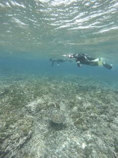 3/28西表島バラス島体験ダイビングツアー33