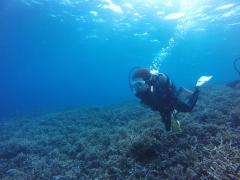 12/28西表島バラス島体験ダイビングツアー14