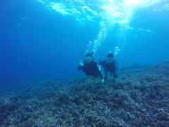 12/28西表島バラス島体験ダイビングツアー15