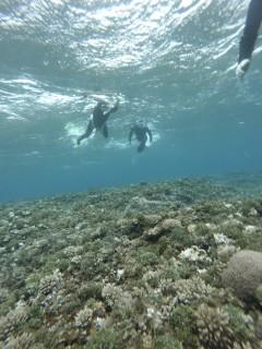 3/28西表島バラス島体験ダイビングツアー36