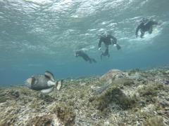 3/28西表島バラス島体験ダイビングツアー47