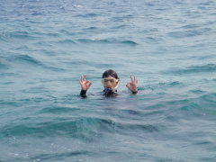 3/28西表島バラス島体験ダイビングツアー57