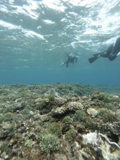 3/28西表島バラス島体験ダイビングツアー38