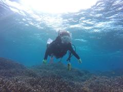 12/28西表島バラス島体験ダイビングツアー20