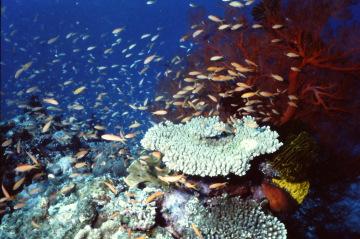 サンゴ礁の魚1