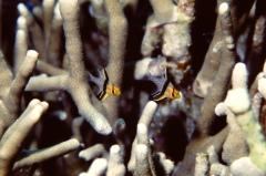 サンゴ礁の魚2