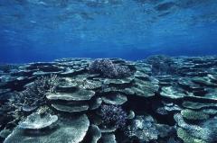サンゴ礁3