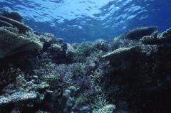 サンゴ礁7